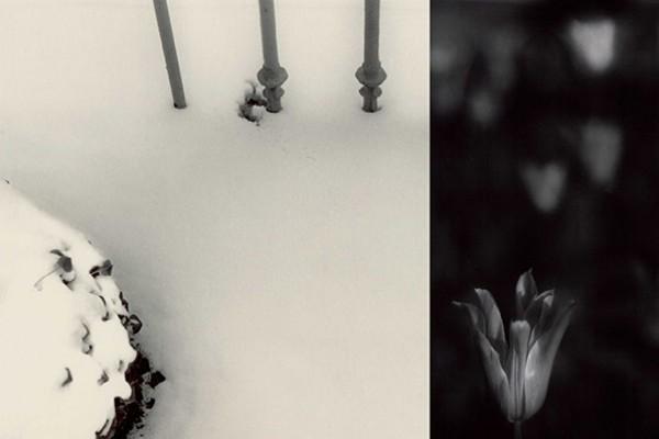 Paola Mongelli. Il Bianco e il Nero