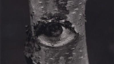eyes|2006